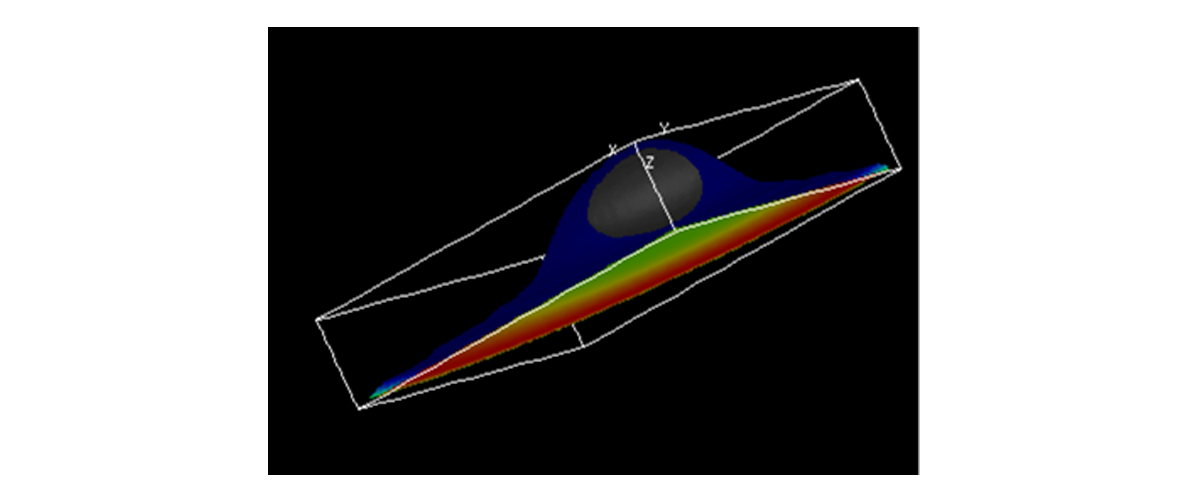 A spatial model of YAP/TAZ signaling.